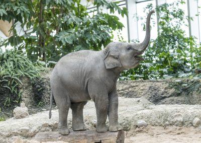 Stärker als ein Elefant: Eine Firewall für den Zoo Zürich