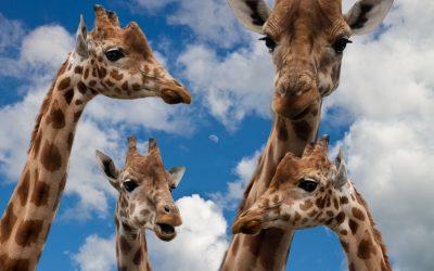 Event zwischen Elefanten und Giraffen
